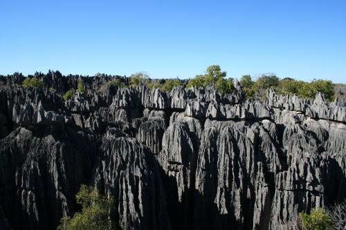 ツィンギ・デ・ベマラ厳正自然保護区の画像 p1_5
